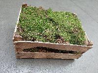 Plattenmoos GRÜN (natur, unbehandelt) Kiste L=40cm x B=30cm x H=20cm