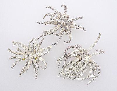 Spidergum Claws GRAU-WASHED 30 Stück Klauen