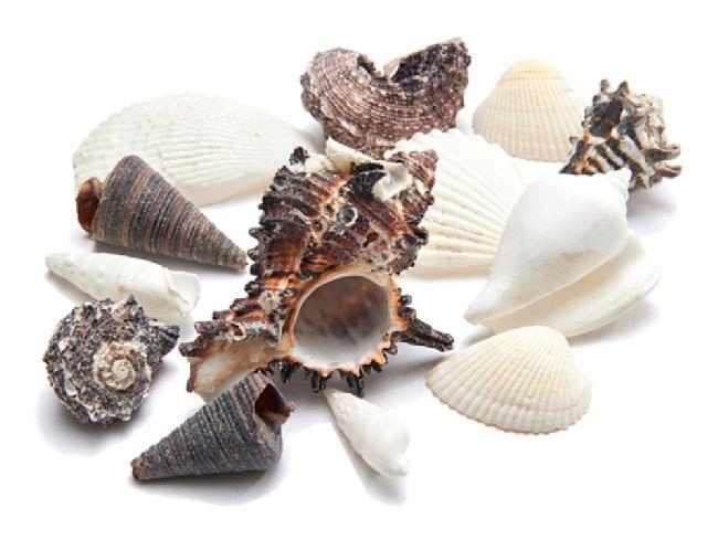 Shell Muschel Mix SCHWARZ-WEISS ca. 4cm  1kg